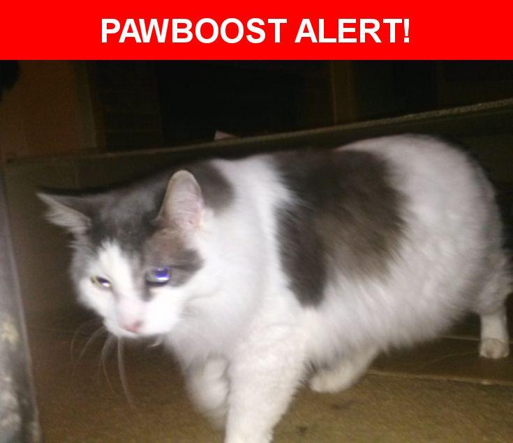 Please spread the word! Boogs was last seen in Arlington, TX 76006.  Description: Fluffy grey and white neutered male   Nearest Address: Woodcreek Apartments Arlington Tx