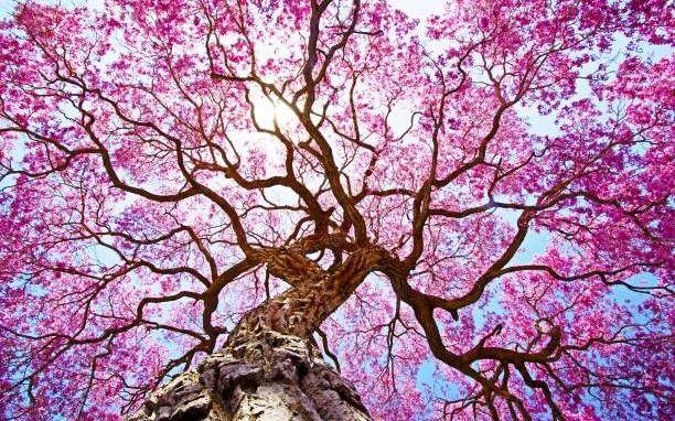 Τι δέντρο – προσωπικότητα είσαι; Κάνε το κέλτικο τεστ!