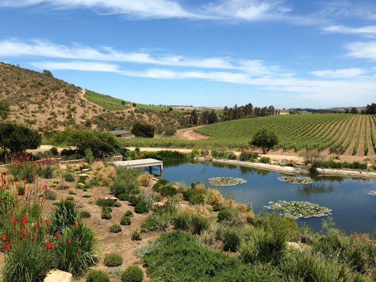 A Beginner's Guide to Chilean Wine