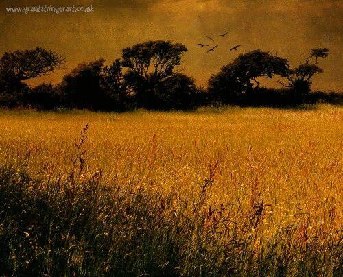 Meadow storm