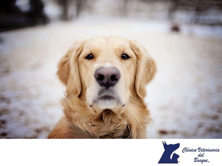 #veterinariadelbosque #veterinaria #cuidadodemascotas #mascotassaludables #esteticacanina #clinicaveterinariadelbosque #especialistasencuidadodemascotas www.veterinariadelbosque.com Veterinaria Del Bosque, Veterinaria, Cuidado de mascotas, mascotas, mascotas saludables, estética canina, Del Bosque.