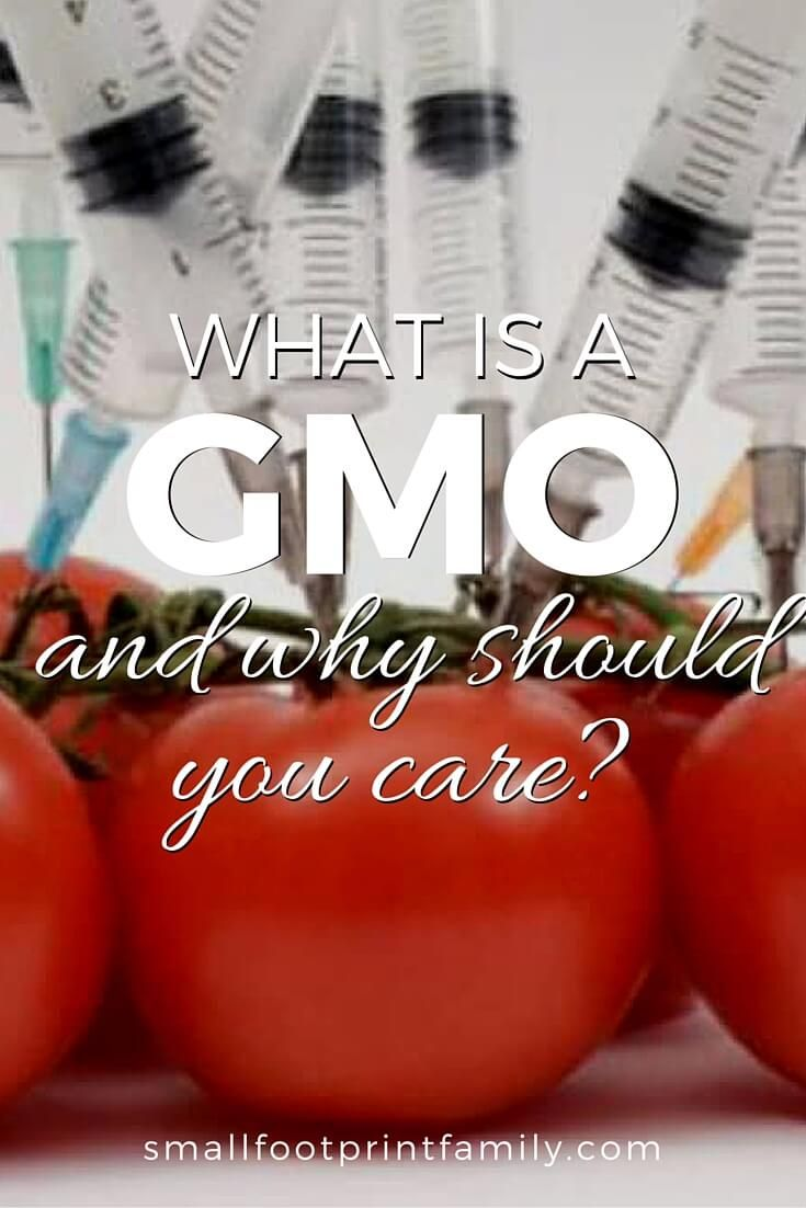 Unless you know what is a GMO and how to avoid them, you will inevitably become a guinea pig in the vast health experiment being perpetuated on us all.
