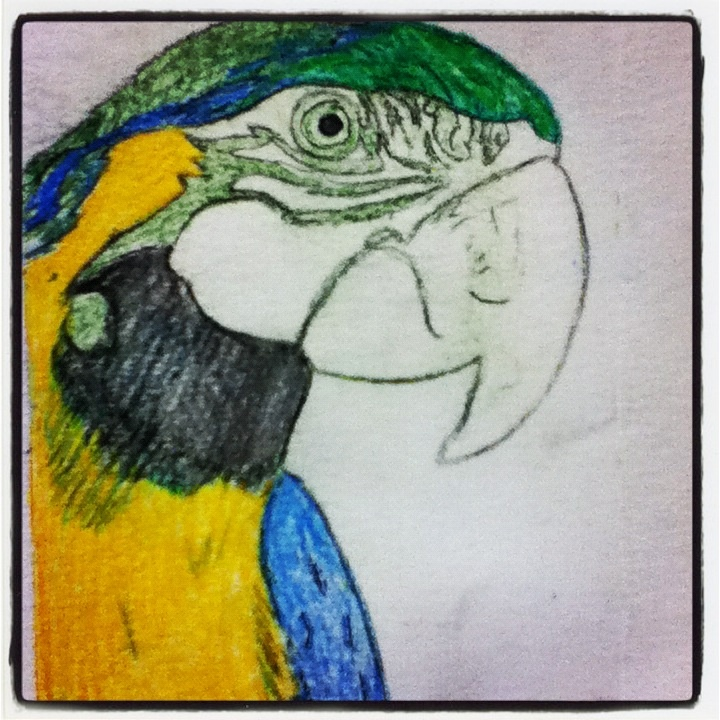 parrot etching