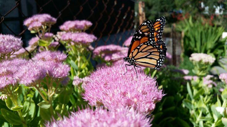 Monarch , South Canterbury NZ