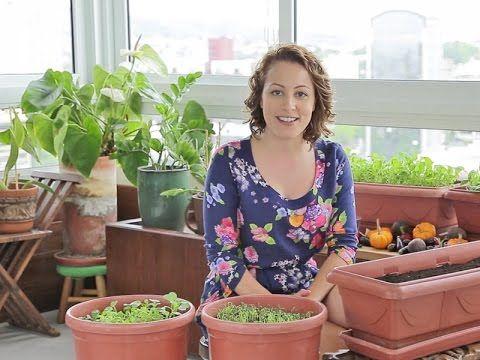 Minha Horta Desafio #3: Horta demora pra crescer