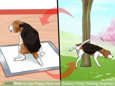 Image titled Use Puppy Pads and Outdoor Potty Training Together Step 13 #puppytrainingnipping