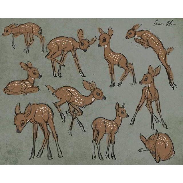 aaronblaiseart: Sketching young deer today. #deer #fawn #drawing #sketch