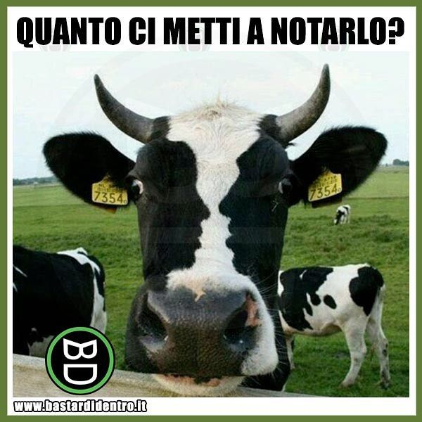 Lo avete notato? Tagga i tuoi amici e #condividi #perfettamente #bastardidentro #mucca #macchia www.bastardidentro.it