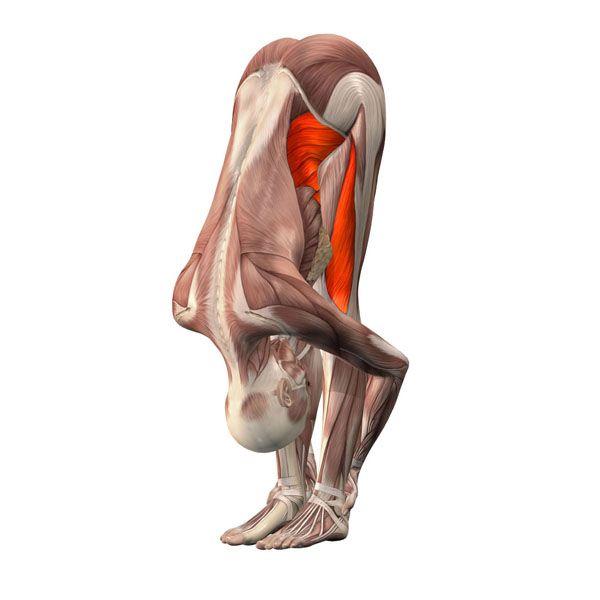 Standing forward bend - Uttanasana - Yoga Poses | YOGA.com