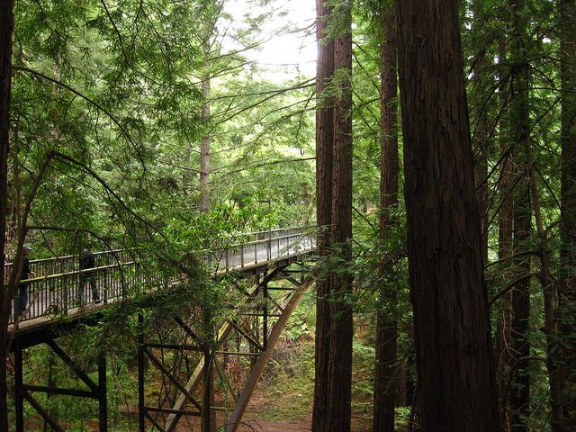uc santa cruz photos | UC Santa Cruz bridge | Flickr - Photo Sharing!