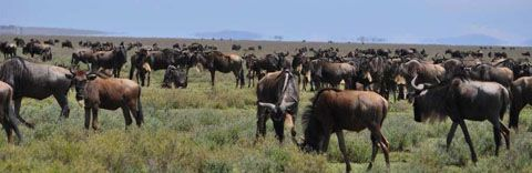 6 Day Tanzania Safari. This safari operates on a set departure basis, departing every Wed. This means anyone can join this safari, and as long as there is a min of 2 pax the safari will run. The itinerary takes in the most famous of Tanzania's safari destinations including the Ngorongoro Crater, the Serengeti National Park and the lake Manyara National Park.