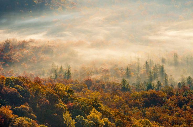 Картинки по запросу лесной туман