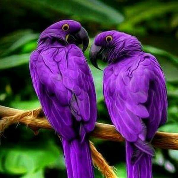 I don't like birds.... But they are BEAUTIFUL!!!!
