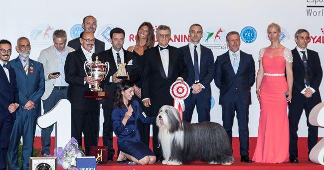 World Dog Show 2015 - il cane più bello del mondo è un Pastore Inglese