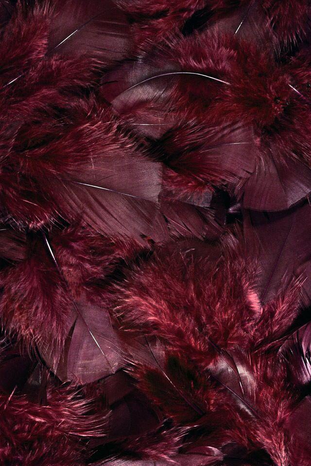 Burgundy feathers