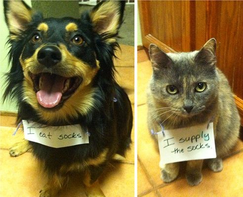 The 35 Naughtiest Dogs On The Planet. You'll Laugh So Hard When You See What They Did! | Distractify