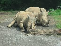 Save the Rhino Day