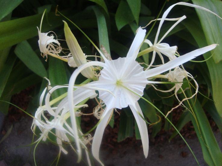 Fascinating flower