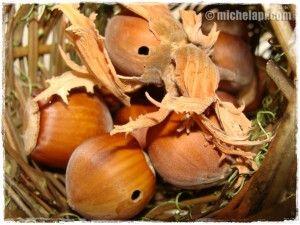 nocciole cadute #diario #vita #reiki http://www.michelapi.com/wp/?p=1500