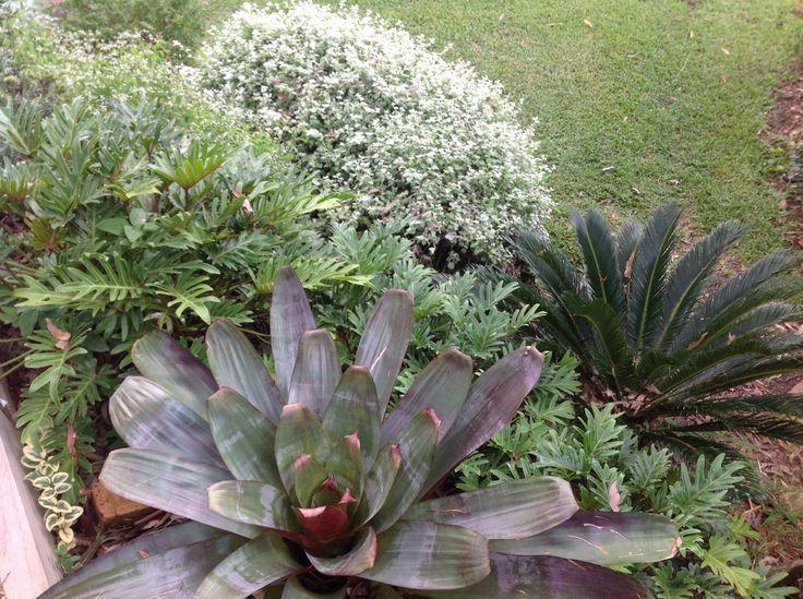 Alcantarea silver plum cycas revoluta philodendron for Cycas landscape design
