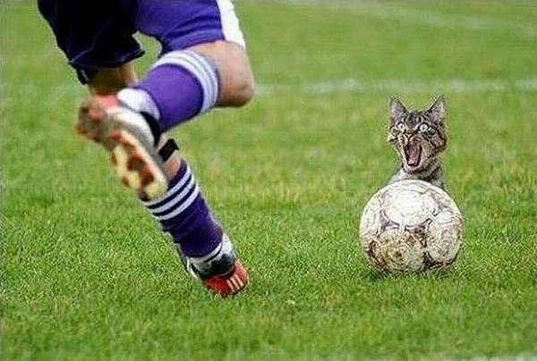 Lustige und witzige fussball bilder und fotos 77