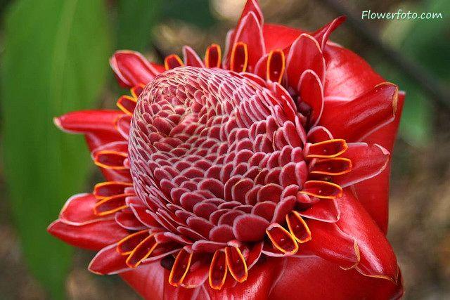 26 best images about pretty plants on Pinterest | Ornament ...