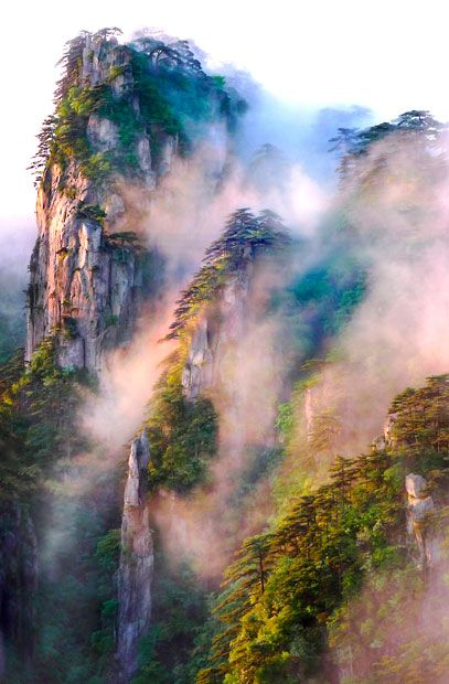 Gloria King: Sunrise on Misty Mountains. Huangshan, Anhui Province, China.1st Place, Trees, Woods & Forests.  Picture: , International Garden Photographer of the Year 2013