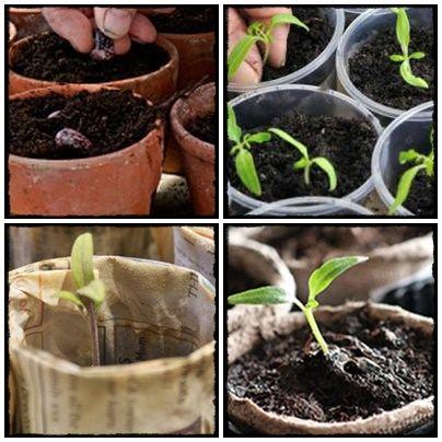seed, grow, home, homesteding, farm, flowers, vege