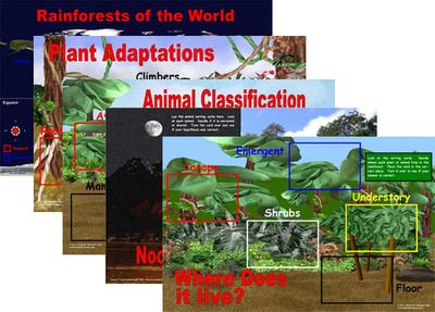 Rainforest Plants and Animals Sorting Mats and Cards (Included in Rainforest--Maps, Mural, Museum)  -- $
