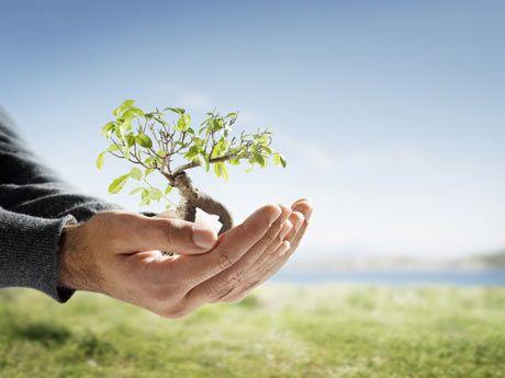 Ciclo da água A infiltração de água em solos com cobertura florestal é 40 vezes maior do que em s...