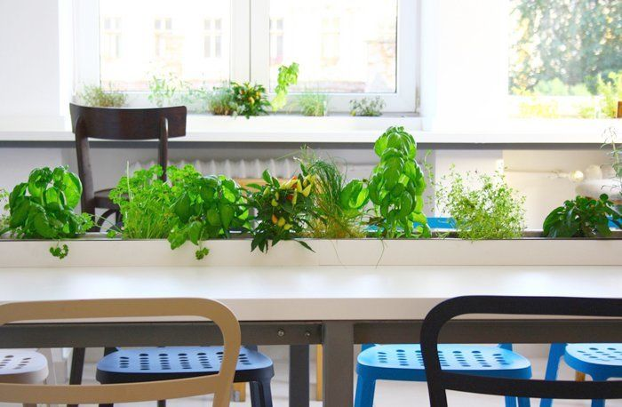 Cool Office Space Designs Big Office Room Nice Cool Office Plants