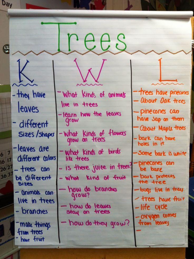 trees kwl chart prek creative curriculum preschool