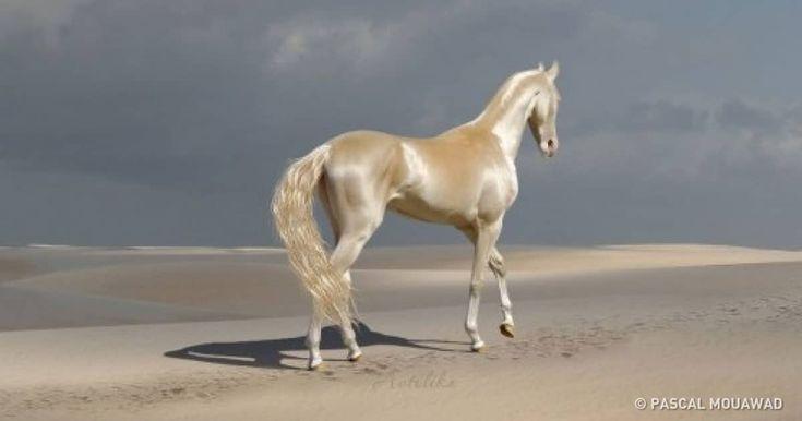 15 cavalos tão belos que nos fazem suster a respiração