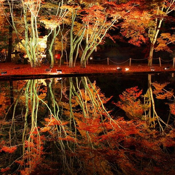Real reflection, autumleaves on the water. in Sogi