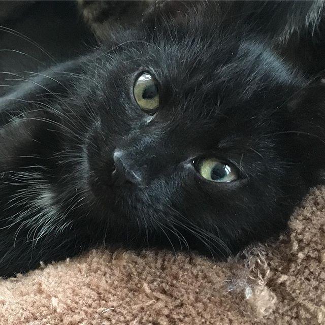 Minikatz Endlich Mal Ein Foto Von Motte Auf Dem Man Mehr Erkennt Als Nur Einen Schwarzen Fleck Mit Augen Und Ist Sie Nicht Katzen Wilde Katzen Und Katzenbilder
