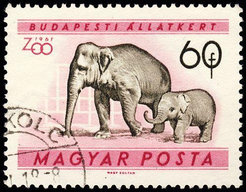 stamp hungary 1961 Elephas maximus Indischer Elefant indian elephant by pixelschubser.de, via Flickr