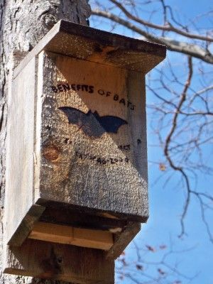 "tips for building bat houses - ""chambers at least 14"" wide and 24"" tall (bigger is better), and a wide landing area with a very rough surface beneath the entrance.  Do not use pressure treated lumber. These furry little creatures prefer temperatures between 85°F and 100°F."""