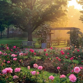 Park Of Roses In Columbus Oh Places To See Pinterest