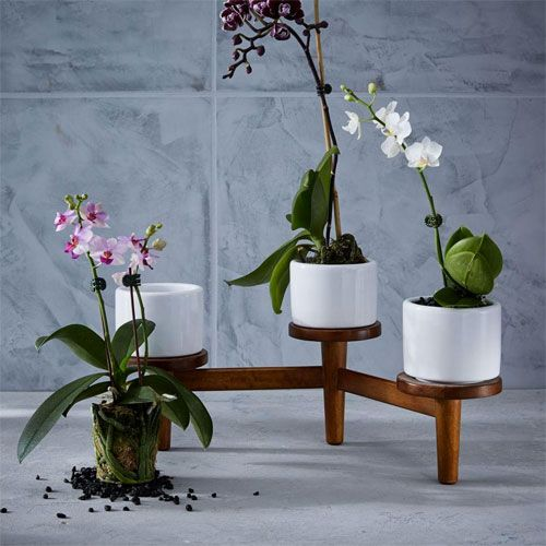 Midcentury turned leg tabletop planter at West Elm