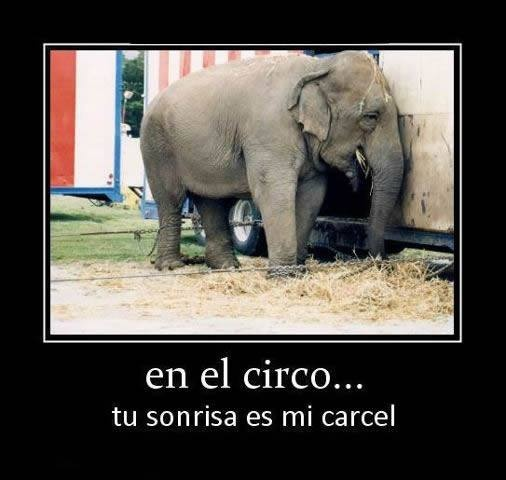 No a los espectaculos con animales!!!