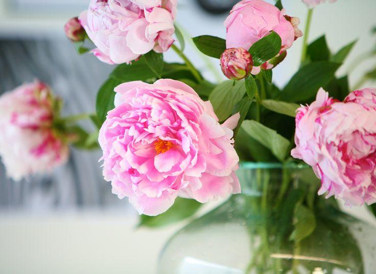 Boeket Pioenrozen <3 Lieflijk roze en een uitbundige bloeiwijze, dat zijn deze prachtige Pioenen. Een boeket waar je de ontvanger, maar ook zeker jezelf een enorm plezier mee doet! De Pioen is een seizoensbloem en maakt haar daarom extra speciaal. Geniet er van, nu ze volop te verkrijgen is.