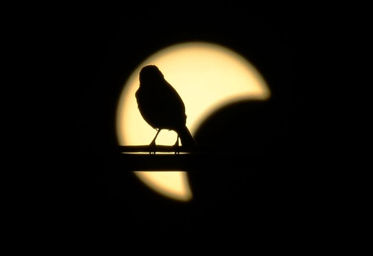 A small bird rests on a powerline backgrounded by an annular solar eclipse seen from Los Angeles, California, May 20, 2012 . (Joe Klamarjoe/AFP/GettyImages) The Big Picture