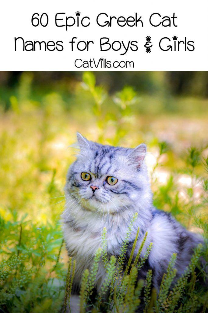 60 Epic Greek Cat Names For Male Female Kittens Catvills Girl Cat Names Cat Names Cute Cat Names