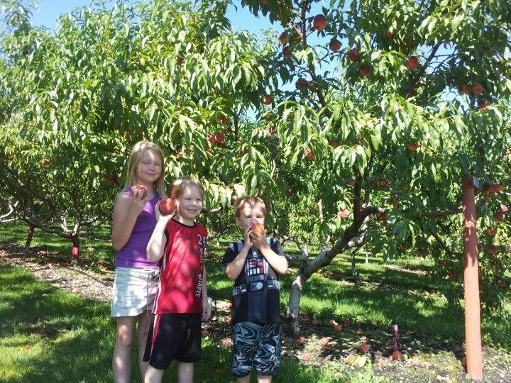 peach trees near Vernon B.C