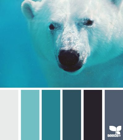 { polar blues } ➸ | Design Seeds