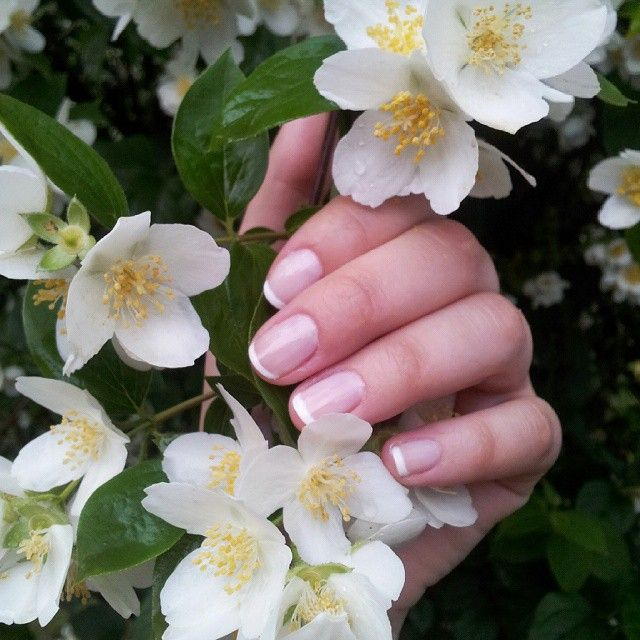 Instead of studying :smile_cat: :nail_care: :cherry_blossom: ___________________________________ #frenchmani #notd #nailsoftheday #insteadofstudying #nailsoftheday #frenchnails #classic  #whitetips #whiteflowers #springshower #finalssuck #classicnails #el