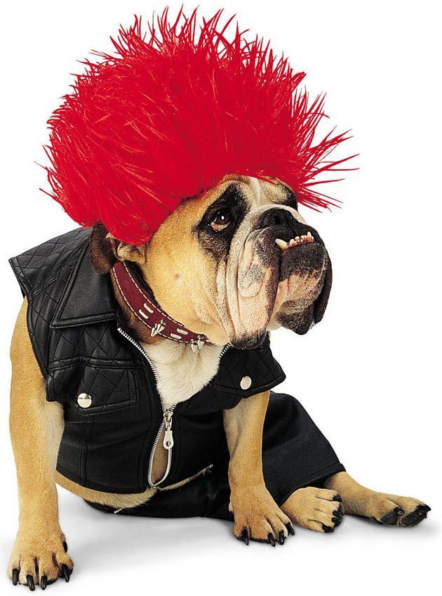 Disfraces de Halloween para perros, Halloween costumes for dogs