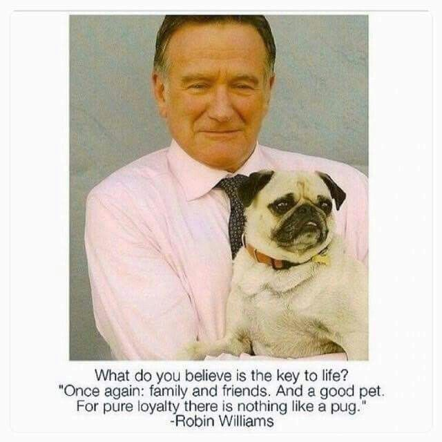 """Nothing Like a Pug"" -Robin Williams"