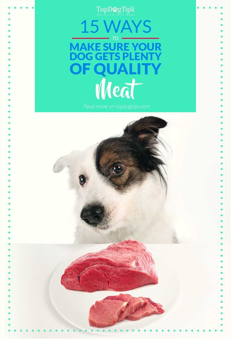 15 Ways to Make Sure Your Dog Gets Enough Meat (of good quality). It seems obvious that meat should be the center of our pets' diet, our dogs and cats are carnivores after all. Unfortunately, choosing the right pet food, isn't always as easy as it sounds. This is because some companies are more interested in profit than our pets' health. #dog #meat #raw #feeding #dogs #pets #barf #nutrition #veterinarians