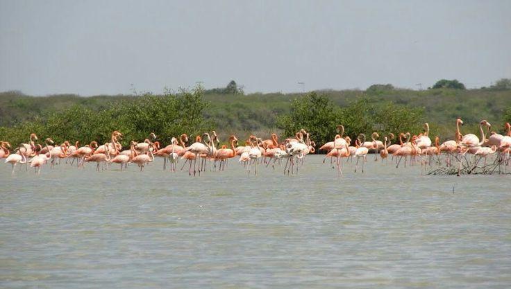 Santuario de fauna y flora los Flamencos ( La Guajira)
